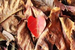 Feuilles d'automne en forme de coeur Images libres de droits