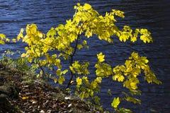 Feuilles d'automne en surface photos libres de droits