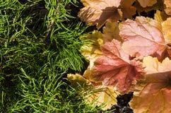 Feuilles d'automne et aiguilles de pin Image libre de droits