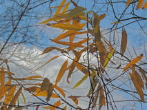 Feuilles d'automne et branches d'arbre contre le ciel Photo stock