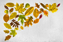Feuilles d'automne et gouttes de pluie colorées sur la fenêtre Photos stock