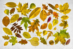Feuilles d'automne et gouttes de pluie colorées sur la fenêtre Photo stock
