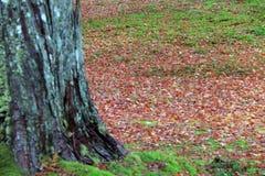 Feuilles d'automne et herbe verte sur la terre empilée autour du tronc d'arbre photo stock