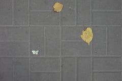 Feuilles d'automne et un papillon sur la tuile de trottoir Photo stock