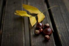 Feuilles d'automne et une châtaigne Image stock