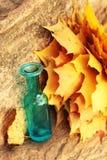 Feuilles d'automne et vase bleu photographie stock libre de droits