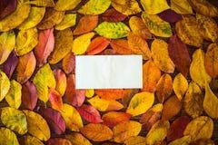 Feuilles d'automne, feuille de papier photo stock
