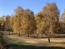 Feuilles d'automne flottant sur l'eau images libres de droits