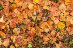 Feuilles d'automne humides après pluie sur la terre Photo libre de droits