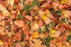 Feuilles d'automne humides après pluie sur la terre Image stock