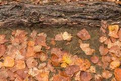 Feuilles d'automne humides après pluie sur la terre Photographie stock libre de droits