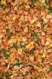 Feuilles d'automne humides après pluie sur la terre Images libres de droits