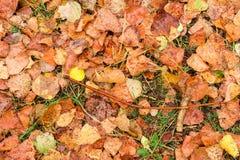 Feuilles d'automne humides après pluie sur la terre Photo stock