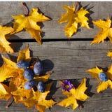Feuilles d'automne jaunes d'érable et d'érable bleu dans le modèle de cercle Photo stock