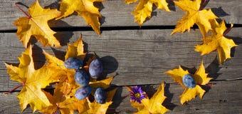 Feuilles d'automne jaunes d'érable et d'érable bleu dans le modèle de cercle Photographie stock libre de droits