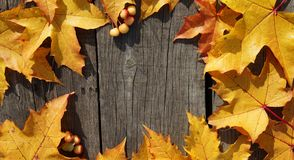 Feuilles d'automne jaunes d'érable et de mini pomme dans le modèle de cercle Photographie stock