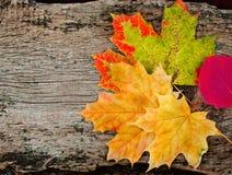 Feuilles d'automne jaunes Images libres de droits