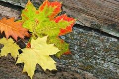 Feuilles d'automne jaunes Photos stock