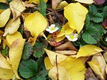 Feuilles d'automne jaunes au sol images stock