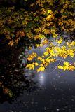 Feuilles d'automne jaunes avec le fond et le soleil foncés image libre de droits