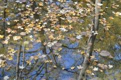 Feuilles d'automne jaunes dans l'eau image libre de droits