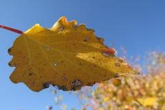 Feuilles d'automne jaunes sur un fond lumineux de ciel bleu Photo stock