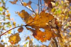 Feuilles d'automne jaunes sur un fond lumineux de ciel bleu Images stock