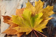 Feuilles d'automne jaunes sur une surface en bois photo libre de droits