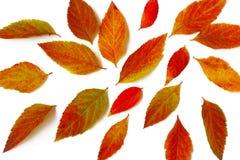 Feuilles d'automne lumineuses aléatoirement dispersées Image libre de droits