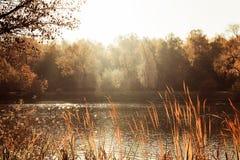 Feuilles d'automne lumineuses sur un arbre, un étang par temps ensoleillé chaud d'automne de parc image stock