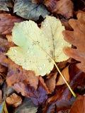 Feuilles d'automne mobiles débloquées de papier peint Photo stock