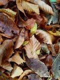 feuilles d'automne mobiles verrouillées de papier peint Photos libres de droits