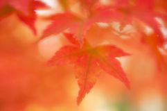 Feuilles d'automne molles rêveuses brouillées de foyer, Images stock