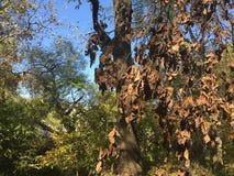 Feuilles d'automne mortes Forêt, arbres Image libre de droits