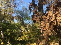 Feuilles d'automne mortes Forêt, arbres Photographie stock libre de droits