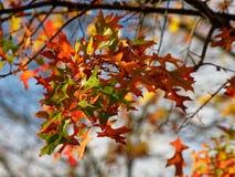 Feuilles d'automne multicolores sur un arbre et un ciel bleu photos libres de droits