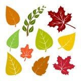 Feuilles d'automne réglées colorées Vecteur illustration libre de droits