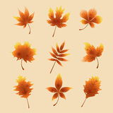 Feuilles d'automne rouges Photographie stock libre de droits