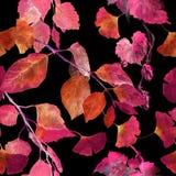 Feuilles d'automne rouges, fond noir Modèle sans couture d'automne de contraste watercolor illustration de vecteur