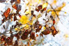 Feuilles d'automne sèches sur l'arbre Photographie stock libre de droits