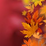 Feuilles d'automne sèches tombant de l'air Image stock