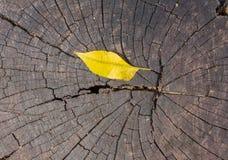Feuilles d'automne sur de vieux bois Photographie stock