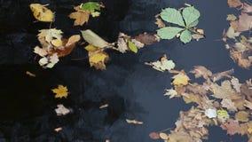 Feuilles d'automne sur l'eau banque de vidéos