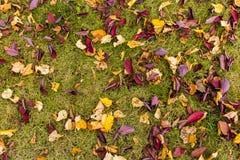 Feuilles d'automne sur l'herbe Photo stock