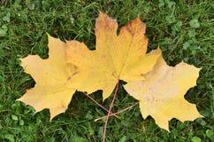 Feuilles d'automne sur l'herbe verte dans la forêt Images stock