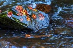 Feuilles d'automne sur la roche humide Photo stock