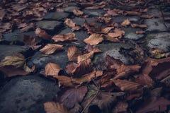 Feuilles d'automne sur la route de pavé rond Images stock