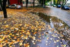 Feuilles d'automne sur la rue humide Photographie stock