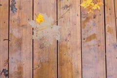 Feuilles d'automne sur la surface en bois humide Images libres de droits