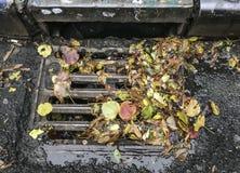 Feuilles d'automne sur le drain image libre de droits